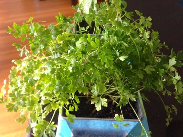 The Parsley Patch.