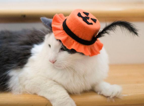 Good ol' pumpkin head, ready for Halloween.