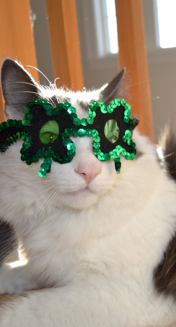 O'Kitty all ready for St Patrick's Day.