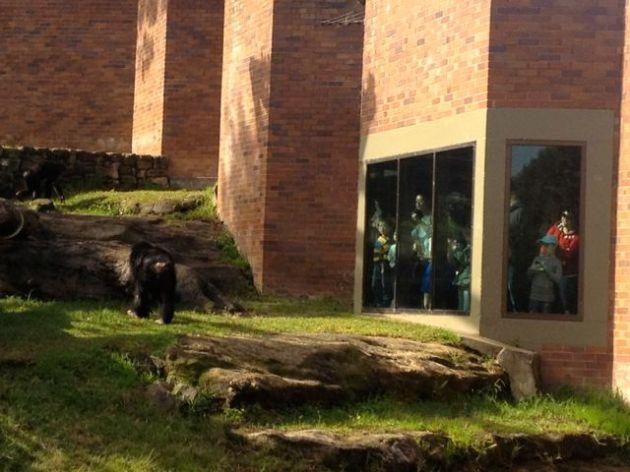 Where the Chimpanzee enclosure meets the Human enclosure.
