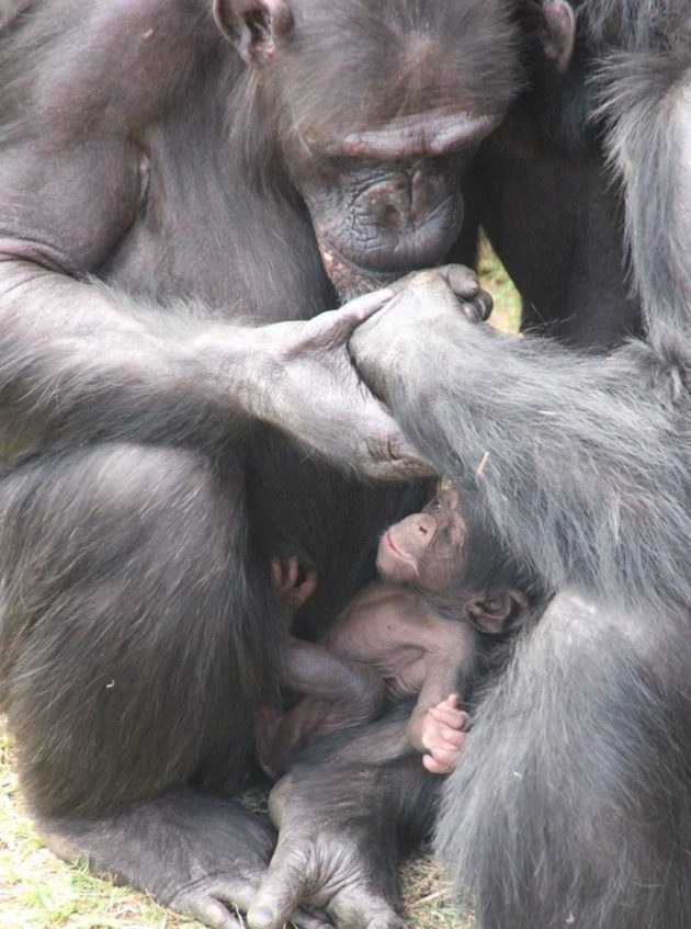 The Fam.  [photo by Lisa Ridley, from the Taronga Zoo Facebook page]
