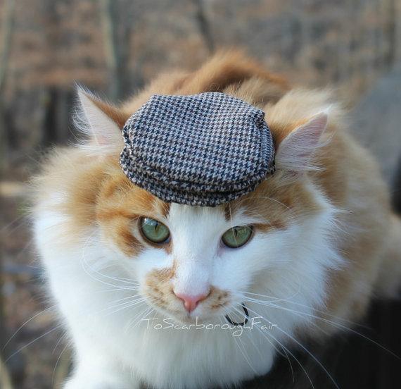 catcap