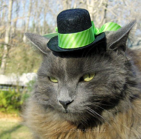 cattophat